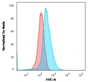 Flow cytometry testing of human Molt-4 cells with CD1a antibody (clone 66IIC7); Red=isotype control, Blue= CD1a antibody.