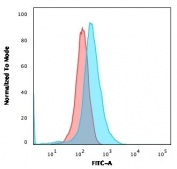 Flow cytometry testing of human Molt-4 cells with CD1a antibody (clone CBT6); Red=isotype control, Blue= CD1a antibody.
