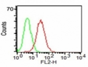 Flow cytometry testing of KG-1 cells using anti-CD34 antibody (red) and isotype control (green).