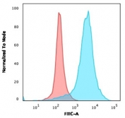Flow cytometry testing of PFA-fixed human U-87 MG cells with LAMP-3 antibody (clone LAMP3/968); Red=isotype control, Blue= LAMP-3 antibody.