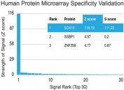 Protein array validation of the SOX10 antibody: Analysis of HuProt(TM) microarray containing more than 19,000 full-length human proteins using SOX10 antibody (clone SOX10/991). These results demonstrate the foremost specificity of the SOX10/991 mAb.<P><P>Z- and S- score: The Z-score represents the strength of a signal that an antibody (in combination with a fluorescently-tagged anti-IgG secondary Ab) produces when binding to a particular protein on the HuProt(TM) array. Z-scores are described in units of standard deviations (SD's) above the mean value of all signals generated on that array. If the targets on the HuProt(TM) are arranged in descending order of the Z-score, the S-score is the difference (also in units of SD's) between the Z-scores. The S-score therefore represents the relative target specificity of an Ab to its intended target.