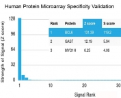 Analysis of HuProt(TM) microarray containing more than 19,000 full-length human proteins using recombinant Bcl6 antibody (clone rBCL6/1527). These results demonstrate the foremost specificity of the rBCL6/1527 mAb. Z- and S- score: The Z-score represents the strength of a signal that an antibody (in combination with a fluorescently-tagged anti-IgG secondary Ab) produces when binding to a particular protein on the HuProt(TM) array. Z-scores are described in units of standard deviations (SD's) above the mean value of all signals generated on that array. If the targets on the HuProt(TM) are arranged in descending order of the Z-score, the S-score is the difference (also in units of SD's) between the Z-scores. The S-score therefore represents the relative target specificity of an Ab to its intended target.