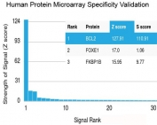 Analysis of HuProt(TM) microarray containing more than 19,000 full-length human proteins using recombinant Bcl2 antibody (clone rBCL2/782). These results demonstrate the foremost specificity of the rBCL2/782 mAb. <BR>Z- and S- score: The Z-score represents the strength of a signal that an antibody (in combination with a fluorescently-tagged anti-IgG secondary Ab) produces when binding to a particular protein on the HuProt(TM) array. Z-scores are described in units of standard deviations (SD's) above the mean value of all signals generated on that array. If the targets on the HuProt(TM) are arranged in descending order of the Z-score, the S-score is the difference (also in units of SD's) between the Z-scores. The S-score therefore represents the relative target specificity of an Ab to its intended target.