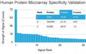 Analysis of HuProt(TM) microarray containing more than 19,000 full-length human proteins using recombinant Kappa antibody (clone rKLC264). These results demonstrate the foremost specificity of the rKLC264 mAb.  Z- and S- score: The Z-score represents the strength of a signal that an antibody (in combination with a fluorescently-tagged anti-IgG secondary Ab) produces when binding to a particular protein on the HuProt(TM) array. Z-scores are described in units of standard deviations (SD's) above the mean value of all signals generated on that array. If the targets on the HuProt(TM) are arranged in descending order of the Z-score, the S-score is the difference (also in units of SD's) between the Z-scores. The S-score therefore represents the relative target specificity of an Ab to its intended target.