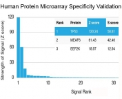 Analysis of HuProt(TM) microarray containing more than 19,000 full-length human proteins using recombinant TP53 antibody (clone rBP53-12). Z- and S- score: The Z-score represents the strength of a signal that an antibody (in combination with a fluorescently-tagged anti-IgG secondary Ab) produces when binding to a particular protein on the HuProt(TM) array. Z-scores are described in units of standard deviations (SD's) above the mean value of all signals generated on that array. If the targets on the HuProt(TM) are arranged in descending order of the Z-score, the S-score is the difference (also in units of SD's) between the Z-scores. The S-score therefore represents the relative target specificity of an Ab to its intended target.