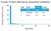 Analysis of HuProt(TM) microarray containing more than 19,000 full-length human proteins using SOX9 antibody (clone PCRP-SOX9-1E5). These results demonstrate the foremost specificity of the PCRP-SOX9-1E5 mAb. Z- and S- score: The Z-score represents the strength of a signal that an antibody (in combination with a fluorescently-tagged anti-IgG secondary Ab) produces when binding to a particular protein on the HuProt(TM) array. Z-scores are described in units of standard deviations (SD's) above the mean value of all signals generated on that array. If the targets on the HuProt(TM) are arranged in descending order of the Z-score, the S-score is the difference (also in units of SD's) between the Z-scores. The S-score therefore represents the relative target specificity of an Ab to its intended target.