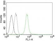 Flow cytometry testing of permeabilized Jurkat cells with Vimentin antibody (clone VM452, green), cells alone (black) and isotype control (gray).
