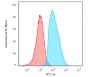 Flow cytometry testing of human HeLa cells with B2M antibody (clone MGBP2-1); Red=isotype control, Blue= B2M antibody.