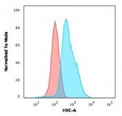 Flow cytometry testing of PFA-fixed human K562 cells with recombinant Calponin antibody (clone RMCN1-1); Red=isotype control, Blue= recombinant Calponin antibody.