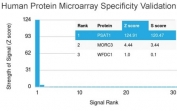 Analysis of HuProt(TM) microarray containing more than 19,000 full-length human proteins using PSAT1 antibody (clone CPTC-PSAT1-1). These results demonstrate the foremost specificity of the CPTC-PSAT1-1 mAb. Z- and S- score: The Z-score represents the strength of a signal that an antibody (in combination with a fluorescently-tagged anti-IgG secondary Ab) produces when binding to a particular protein on the HuProt(TM) array. Z-scores are described in units of standard deviations (SD's) above the mean value of all signals generated on that array. If the targets on the HuProt(TM) are arranged in descending order of the Z-score, the S-score is the difference (also in units of SD's) between the Z-scores. The S-score therefore represents the relative target specificity of an Ab to its intended target.