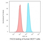Intracellular FACS staining of human MCF7 cells with APE1 antibody (blue) and isotype control (red).