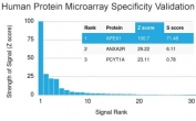 Analysis of HuProt(TM) microarray containing more than 19,000 full-length human proteins using APE1 antibody (clone CPTC-APEX1-2). These results demonstrate the foremost specificity of the CPTC-APEX1-2 mAb. Z- and S- score: The Z-score represents the strength of a signal that an antibody (in combination with a fluorescently-tagged anti-IgG secondary Ab) produces when binding to a particular protein on the HuProt(TM) array. Z-scores are described in units of standard deviations (SD's) above the mean value of all signals generated on that array. If the targets on the HuProt(TM) are arranged in descending order of the Z-score, the S-score is the difference (also in units of SD's) between the Z-scores. The S-score therefore represents the relative target specificity of an Ab to its intended target.