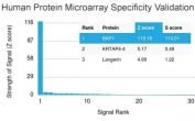 Analysis of HuProt(TM) microarray containing more than 19,000 full-length human proteins using BAP1 antibody (clone BAP1/2431). These results demonstrate the foremost specificity of the BAP1/2431 mAb. Z- and S- score: The Z-score represents the strength of a signal that an antibody (in combination with a fluorescently-tagged anti-IgG secondary Ab) produces when binding to a particular protein on the HuProt(TM) array. Z-scores are described in units of standard deviations (SD's) above the mean value of all signals generated on that array. If the targets on the HuProt(TM) are arranged in descending order of the Z-score, the S-score is the difference (also in units of SD's) between the Z-scores. The S-score therefore represents the relative target specificity of an Ab to its intended target.