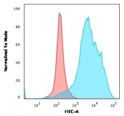 Flow cytometry testing of PFA-fixed human U-87 MG cells with CD63 antibody (clone LAMP3/2990R); Red=isotype control, Blue= CD63 antibody.