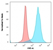 Flow cytometry testing of PFA-fixed human U-87 MG cells with recombinant CD63 antibody (clone rMX-49.129.5); Red=isotype control, Blue= CD63 antibody.