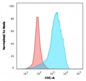 Flow cytometry testing of PFA-fixed human U-87 MG cells with CD63 antibody (clone CDLA63-2R); Red=isotype control, Blue= CD63 antibody.