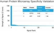 Analysis of HuProt(TM) microarray containing more than 19,000 full-length human proteins using human Albumin antibody (clone ALB/2141). These results demonstrate the foremost specificity of the ALB/2141 mAb.<BR>Z- and S- score: The Z-score represents the strength of a signal that an antibody (in combination with a fluorescently-tagged anti-IgG secondary Ab) produces when binding to a particular protein on the HuProt(TM) array. Z-scores are described in units of standard deviations (SD's) above the mean value of all signals generated on that array. If the targets on the HuProt(TM) are arranged in descending order of the Z-score, the S-score is the difference (also in units of SD's) between the Z-scores. The S-score therefore represents the relative target specificity of an Ab to its intended target.