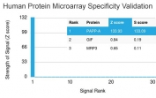 Analysis of HuProt(TM) microarray containing more than 19,000 full-length human proteins using PAPPA antibody (clone PAPPA/2717). These results demonstrate the foremost specificity of the PAPPA/2717 mAb. Z- and S- score: The Z-score represents the strength of a signal that an antibody (in combination with a fluorescently-tagged anti-IgG secondary Ab) produces when binding to a particular protein on the HuProt(TM) array. Z-scores are described in units of standard deviations (SD's) above the mean value of all signals generated on that array. If the targets on the HuProt(TM) are arranged in descending order of the Z-score, the S-score is the difference (also in units of SD's) between the Z-scores. The S-score therefore represents the relative target specificity of an Ab to its intended target.