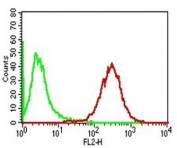 Flow cytometry testing of permeabilized human PMBC with Adipophilin antibody (clone ADFP/1365); Red=isotype control, Blue= Adipophilin antibody.