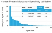 Analysis of HuProt(TM) microarray containing more than 19,000 full-length human proteins using AKT1 antibody (clone AKT1/2784). These results demonstrate the foremost specificity of the AKT1/2784 mAb. Z- and S- score: The Z-score represents the strength of a signal that an antibody (in combination with a fluorescently-tagged anti-IgG secondary Ab) produces when binding to a particular protein on the HuProt(TM) array. Z-scores are described in units of standard deviations (SD's) above the mean value of all signals generated on that array. If the targets on the HuProt(TM) are arranged in descending order of the Z-score, the S-score is the difference (also in units of SD's) between the Z-scores. The S-score therefore represents the relative target specificity of an Ab to its intended target.