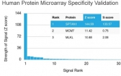 Analysis of HuProt(TM) microarray containing more than 19,000 full-length human proteins using SPTAN1 antibody (clone SPTAN1/3352). These results demonstrate the foremost specificity of the SPTAN1/3352 mAb. Z- and S- score: The Z-score represents the strength of a signal that an antibody (in combination with a fluorescently-tagged anti-IgG secondary Ab) produces when binding to a particular protein on the HuProt(TM) array. Z-scores are described in units of standard deviations (SD's) above the mean value of all signals generated on that array. If the targets on the HuProt(TM) are arranged in descending order of the Z-score, the S-score is the difference (also in units of SD's) between the Z-scores. The S-score therefore represents the relative target specificity of an Ab to its intended target.