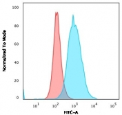 Flow cytometry testing of PFA-fixed human MOLT4 cells with recombinant Thymidylate Synthase antibody (clone rTYMS/1884); Red=isotype control, Blue= recombinant Thymidylate Synthase antibody.