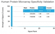 Analysis of HuProt(TM) microarray containing more than 19,000 full-length human proteins using Actinin Alpha 2 antibody (clone ACTN2/3294). These results demonstrate the foremost specificity of the ACTN2/3294 mAb.<br>Z- and S- score: The Z-score represents the strength of a signal that an antibody (in combination with a fluorescently-tagged anti-IgG secondary Ab) produces when binding to a particular protein on the HuProt(TM) array. Z-scores are described in units of standard deviations (SD's) above the mean value of all signals generated on that array. If the targets on the HuProt(TM) are arranged in descending order of the Z-score, the S-score is the difference (also in units of SD's) between the Z-scores. The S-score therefore represents the relative target specificity of an Ab to its intended target.