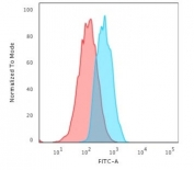 Flow cytometry testing of human MCF7 cells with E-Cadherin antibody (clone CDH1/3256); Red=isotype control, Blue= E-Cadherin antibody.