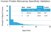 Analysis of HuProt(TM) microarray containing more than 19,000 full-length human proteins using Alpha Tubulin antibody (clone TUBA/3038). These results demonstrate the foremost specificity of the TUBA/3038 mAb. Z- and S- score: The Z-score represents the strength of a signal that an antibody (in combination with a fluorescently-tagged anti-IgG secondary Ab) produces when binding to a particular protein on the HuProt(TM) array. Z-scores are described in units of standard deviations (SD's) above the mean value of all signals generated on that array. If the targets on the HuProt(TM) are arranged in descending order of the Z-score, the S-score is the difference (also in units of SD's) between the Z-scores. The S-score therefore represents the relative target specificity of an Ab to its intended target.