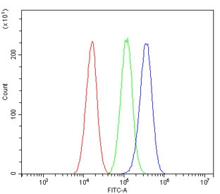 Flow cytometry testing of human A549 cells with ALDH2 antibody at 1ug/million cells (blocked with goat sera); Red=cells alone, Green=isotype control, Blue= ALDH2 antibody.