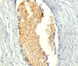 IHC: Formalin-fixed, paraffin-embedded human placenta stained with AMPD3 antibody (AMPD3/901)