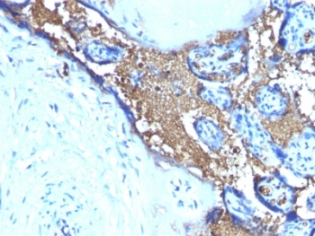 IHC testing of FFPE human placenta stained with anti-Glycophorin A antibody (clone SPM599). Required HIER: boil tissue sections in pH 9 10mM Tris with 1mM EDTA for 10-20 min.