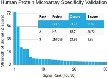 Protein array validation of the Bcl6 antibody: Analysis of Protein Array containing more than 19,000 full-length human proteins using Bcl6 antibody (clone BCL6/1475). Z- and S- score: The Z-score represents the strength of a signal that an antibody (in combination with a fluorescently-tagged anti-IgG secondary antibody) produces when binding to a particular protein on the HuProt(TM) array. Z-scores are described in units of standard deviations (SD's) above the mean value of all signals generated on that array. If the targets on the HuProt(TM) are arranged in descending order of the Z-score, the S-score is the difference (also in units of SD's) between the Z-score. The S-score therefore represents the relative target specificity of an antibody to its intended target.