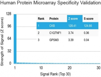 Protein array validation of the Creatine kinase B type antibody: Analysis of HuProt(TM) microarray containing more than 19,000 full-length human proteins using Creatine kinase B type antibody (clone 2ba6). Z- and S- score: The Z-score represents the strength of a signal that an antibody (in combination with a fluorescently-tagged anti-IgG secondary Ab) produces when binding to a particular protein on the HuProt(TM) array. Z-scores are described in units of standard deviations (SD's) above the mean value of all signals generated on that array. If the targets on the HuProt(TM) are arranged in descending order of the Z-score, the S-score is the difference (also in units of SD's) between the Z-score. The S-score therefore represents the relative target specificity of an Ab to its intended target.
