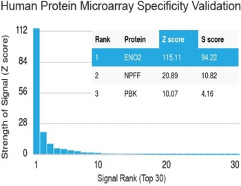 Protein array validation of the Neuron Specific Enolase antibody: Analysis of HuProt(TM) microarray containing more than 19,000 full-length human proteins using Neuron Specific Enolase antibody (clone ENO2/1462). These results demonstrate the foremost specificity of the ENO2/1462 mAb.<P><P>Z- and S- score: The Z-score represents the strength of a signal that an antibody (in combination with a fluorescently-tagged anti-IgG secondary Ab) produces when binding to a particular protein on the HuProt(TM) array. Z-scores are described in units of standard deviations (SD's) above the mean value of all signals generated on that array. If the targets on the HuProt(TM) are arranged in descending order of the Z-score, the S-score is the difference (also in units of SD's) between the Z-scores. The S-score therefore represents the relative target specificity of an Ab to its intended target.