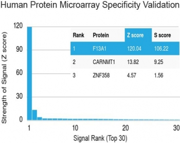Protein array validation of the Factor XIIIa antibody: Analysis of HuProt(TM) microarray containing more than 19,000 full-length human proteins using Factor XIIIa antibody (clone F13A1/1448). These results demonstrate the foremost specificity of the F13A1/1448 mAb.<P><P>Z- and S- score: The Z-score represents the strength of a signal that an antibody (in combination with a fluorescently-tagged anti-IgG secondary Ab) produces when binding to a particular protein on the HuProt(TM) array. Z-scores are described in units of standard deviations (SD's) above the mean value of all signals generated on that array. If the targets on the HuProt(TM) are arranged in descending order of the Z-score, the S-score is the difference (also in units of SD's) between the Z-scores. The S-score therefore represents the relative target specificity of an Ab to its intended target.