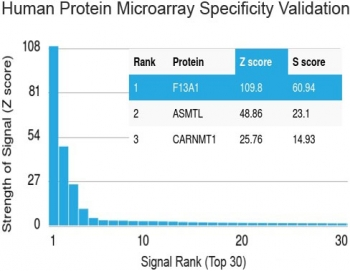 Protein array validation of the Factor XIIIa antibody: Analysis of HuProt(TM) microarray containing more than 19,000 full-length human proteins using Factor XIIIa antibody (clone F13A1/1683). These results demonstrate the foremost specificity of the F13A1/1683 mAb.<P><P>Z- and S- score: The Z-score represents the strength of a signal that an antibody (in combination with a fluorescently-tagged anti-IgG secondary Ab) produces when binding to a particular protein on the HuProt(TM) array. Z-scores are described in units of standard deviations (SD's) above the mean value of all signals generated on that array. If the targets on the HuProt(TM) are arranged in descending order of the Z-score, the S-score is the difference (also in units of SD's) between the Z-scores. The S-score therefore represents the relative target specificity of an Ab to its intended target.