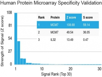 Protein array validation of the MCM7 antibody: Analysis of HuProt(TM) microarray containing more than 19,000 full-length human proteins using MCM7 antibody (clone MCM7/1469). Z- and S- score: The Z-score represents the strength of a signal that an antibody (in combination with a fluorescently-tagged anti-IgG secondary Ab) produces when binding to a particular protein on the HuProt(TM) array. Z-scores are described in units of standard deviations (SD's) above the mean value of all signals generated on that array. If the targets on the HuProt(TM) are arranged in descending order of the Z-score, the S-score is the difference (also in units of SD's) between the Z-scores. The S-score therefore represents the relative target specificity of an Ab to its intended target.