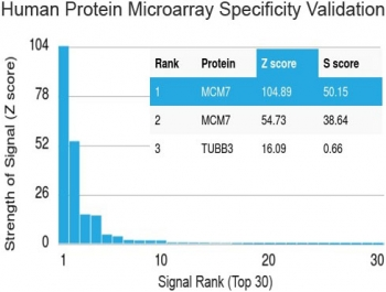 Protein array validation of the MCM7 antibody: Analysis of HuProt(TM) microarray containing more than 19,000 full-length human proteins using MCM7 antibody (clone MCM7/1468). Z- and S- score: The Z-score represents the strength of a signal that an antibody (in combination with a fluorescently-tagged anti-IgG secondary Ab) produces when binding to a particular protein on the HuProt(TM) array. Z-scores are described in units of standard deviations (SD's) above the mean value of all signals generated on that array. If the targets on the HuProt(TM) are arranged in descending order of the Z-score, the S-score is the difference (also in units of SD's) between the Z-scores. The S-score therefore represents the relative target specificity of an Ab to its intended target.