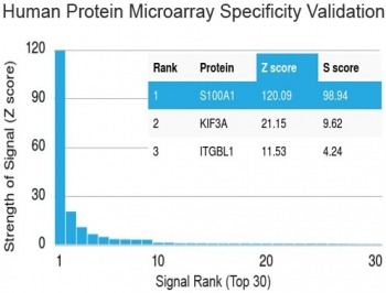 Protein array validation of the S100A1 antibody: Analysis of HuProt(TM) microarray containing more than 19,000 full-length human proteins using S100A1 antibody (clone S100A1/1942). These results demonstrate the foremost specificity of the S100A1/1942 mAb.<P><P>Z- and S- score: The Z-score represents the strength of a signal that an antibody (in combination with a fluorescently-tagged anti-IgG secondary Ab) produces when binding to a particular protein on the HuProt(TM) array. Z-scores are described in units of standard deviations (SD's) above the mean value of all signals generated on that array. If the targets on the HuProt(TM) are arranged in descending order of the Z-score, the S-score is the difference (also in units of SD's) between the Z-scores. The S-score therefore represents the relative target specificity of an Ab to its intended target.