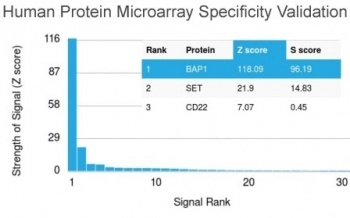 Analysis of HuProt(TM) microarray containing more than 19,000 full-length human proteins using BAP1 antibody (clone BAP1/2432). These results demonstrate the foremost specificity of the BAP1/2432 mAb. Z- and S- score: The Z-score represents the strength of a signal that an antibody (in combination with a fluorescently-tagged anti-IgG secondary Ab) produces when binding to a particular protein on the HuProt(TM) array. Z-scores are described in units of standard deviations (SD's) above the mean value of all signals generated on that array. If the targets on the HuProt(TM) are arranged in descending order of the Z-score, the S-score is the difference (also in units of SD's) between the Z-scores. The S-score therefore represents the relative target specificity of an Ab to its intended target.
