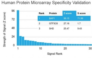Analysis of HuProt(TM) microarray containing more than 19,000 full-length human proteins using BAP1 antibody (clone BAP1/2667). These results demonstrate the foremost specificity of the BAP1/2667 mAb. Z- and S- score: The Z-score represents the strength of a signal that an antibody (in combination with a fluorescently-tagged anti-IgG secondary Ab) produces when binding to a particular protein on the HuProt(TM) array. Z-scores are described in units of standard deviations (SD's) above the mean value of all signals generated on that array. If the targets on the HuProt(TM) are arranged in descending order of the Z-score, the S-score is the difference (also in units of SD's) between the Z-scores. The S-score therefore represents the relative target specificity of an Ab to its intended target.