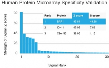 Analysis of HuProt(TM) microarray containing more than 19,000 full-length human proteins using BAP1 antibody. These results demonstrate the foremost specificity of the BAP1/2665 mAb. Z- and S- score: The Z-score represents the strength of a signal that an antibody (in combination with a fluorescently-tagged anti-IgG secondary Ab) produces when binding to a particular protein on the HuProt(TM) array. Z-scores are described in units of standard deviations (SD's) above the mean value of all signals generated on that array. If the targets on the HuProt(TM) are arranged in descending order of the Z-score, the S-score is the difference (also in units of SD's) between the Z-scores. The S-score therefore represents the relative target specificity of an Ab to its intended target.