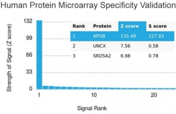 Analysis of HuProt(TM) microarray containing more than 19,000 full-length human proteins using Apolipoprotein B antibody. These results demonstrate the foremost specificity of the APOB/4333 mAb. Z- and S- score: The Z-score represents the strength of a signal that an antibody (in combination with a fluorescently-tagged anti-IgG secondary Ab) produces when binding to a particular protein on the HuProt(TM) array. Z-scores are described in units of standard deviations (SD's) above the mean value of all signals generated on that array. If the targets on the HuProt(TM) are arranged in descending order of the Z-score, the S-score is the difference (also in units of SD's) between the Z-scores. The S-score therefore represents the relative target specificity of an Ab to its intended target.